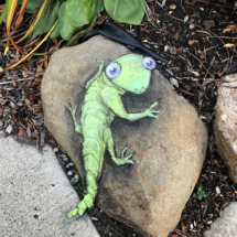 anxious rock lizard